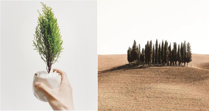 プロジェクトノード 植樹-horz