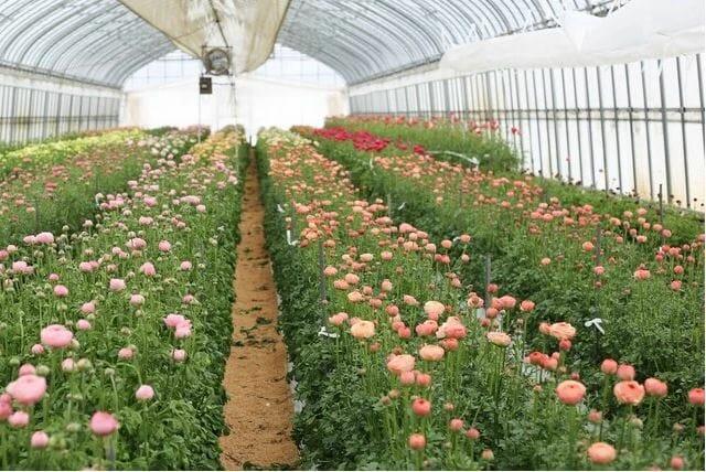 LIFFT定期便 提携農園